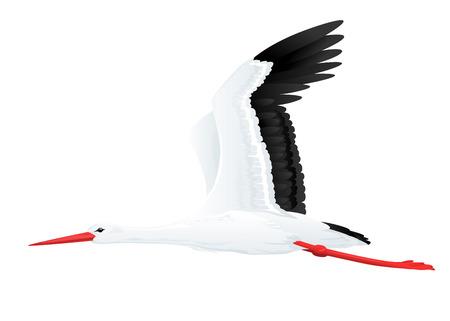 Weiß fliegenden Storch auf weißem Qualität-Abbildung Standard-Bild - 40594659
