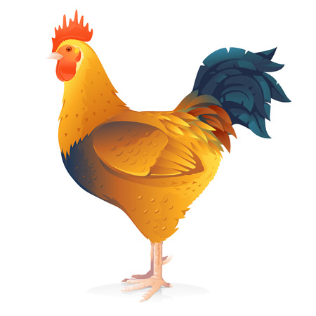 One brown rooster with big tail standing in profile isolated on white quality illustration
