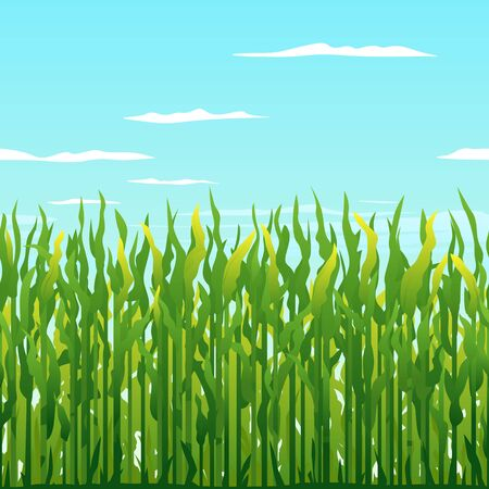 Green corn plants in front on blue sky with clouds, tileable horizontally, harvest time landscape