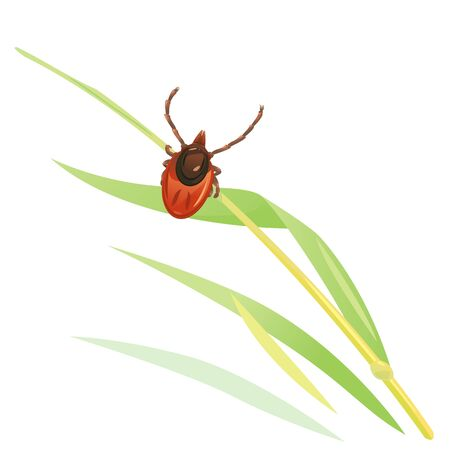 One mite in the green grass waiting in ambush on the trail for the sacrifice, dangerous insect isolated