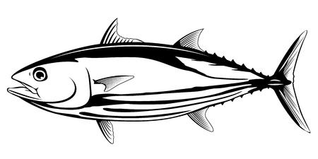 Bonito Thunfisch in Seitenansicht in schwarz-weißer Farbe, isoliert