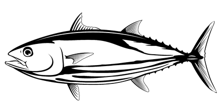Skipjack tuna fish in side view in black and white color, isolated Stock Illustratie
