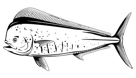 Common dolphinfish in side view in black and white color, isolated