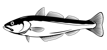 One pollock fish in side view in black and white color, isolated Illustration