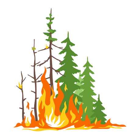 Burning forest spruce and pine in fire flames, nature disaster concept illustration, poster danger, careful with fires in the woods, isolated Illustration