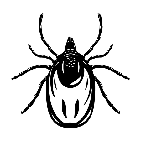 One adult mite in black and white colors in top view, illustation of dangerous insect