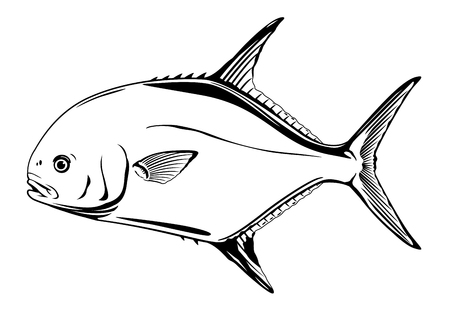 Permit fish in side view, realistic sea fish illustration on white background, recreational fishing, sport fishing