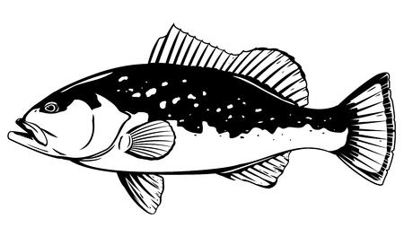 Un pez mero rojo en vista lateral, ilustración de alta calidad de peces de mar, ilustración realista de peces de mar sobre fondo blanco, pesca recreativa, pesca deportiva Ilustración de vector