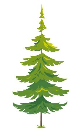 One green tiny spruce tree illustration, white spruce evergreen coniferous tree in side view isolated