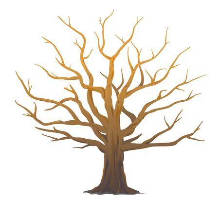 Eine breite massive alte Eiche ohne Blätter isolierte Illustration, majestätische Eiche ohne Laub mit rauem Stamm und großer Krone