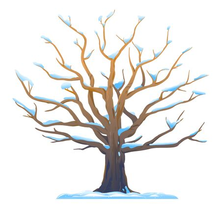 One wide massive old oak tree with snow on branches isolated illustration, majestic oak without foliage with a rough trunk and big crown in winter Çizim