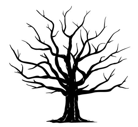 Silhouette of one wide massive old oak tree without leaves isolated illustration, black majestic oak without foliage with a rough trunk and big crown Ilustração