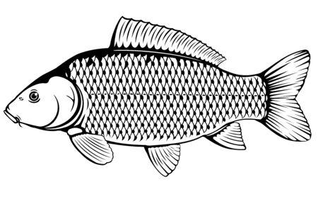 Carpa comune realistica nell'illustrazione isolata in bianco e nero, un pesce d'acqua dolce sulla vista laterale