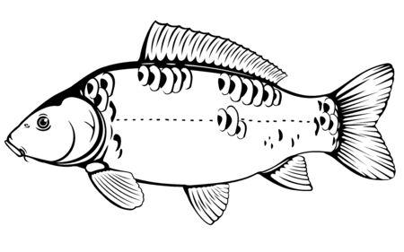 Realistischer Spiegelkarpfen in schwarz-weiß isolierter Darstellung, ein Süßwasserfisch auf der Seitenansicht Vektorgrafik