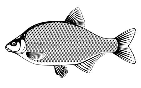Realistic bream fish in black and white isolated illustration, one freshwater fish on side view