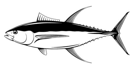 Yellowfin tuna fish in side view in black and white isolated illustration, realistic sea fish illustration on white background, commercial and recreational fisheries