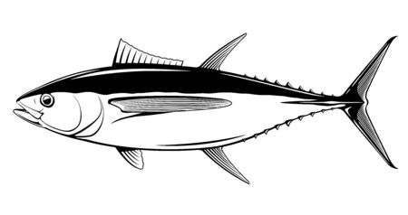 Bigeye tuna fish in side view in black and white isolated illustration, realistic sea fish illustration on white background, commercial and recreational fisheries