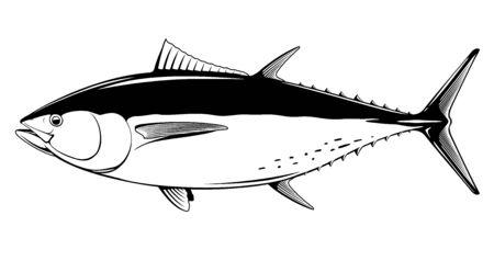 Thon rouge de l'Atlantique en vue latérale en illustration isolée en noir et blanc, illustration réaliste de poisson de mer sur fond blanc, pêche commerciale et récréative