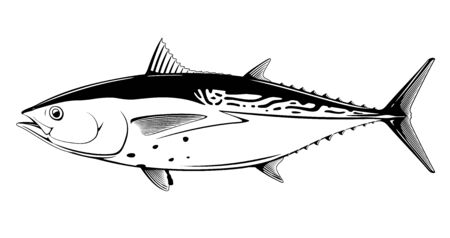 Little tunny fish in side view in black and white isolated illustration, realistic sea fish illustration on white background, commercial and recreational fisheries