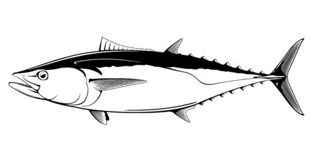 Dogtooth tuna fish in side view in black and white isolated illustration, realistic sea fish illustration on white background, commercial and recreational fisheries  イラスト・ベクター素材