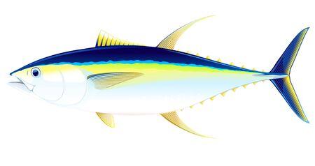 Thon à nageoires jaunes en vue latérale, illustration réaliste de poisson de mer sur fond blanc, pêche commerciale et récréative Vecteurs