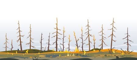 Burned forest spruces after fire nature background, nature disaster concept illustration background, consequences of raising fires in forest, careful with fires in the woods, burnt fir trunks