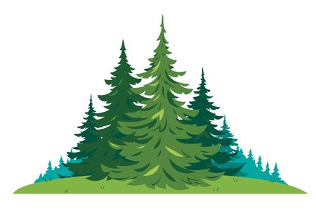 Composition of several spruces trees on green meadow in front view isolated, green dense spruce forest in summer sunny day, European forest clipart illustration