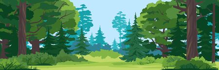 Green glade with grass in mixed forest on summer sunny day, spruce trees and bushes in front view, place for camping in the middle of the forest, place for picnic in nature