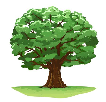 One wide massive magic old oak tree with green leaves on green grass isolated illustration, majestic oak with a rough trunk and big crown on green meadow with grass in summer day isolated