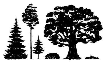 Set of forest trees and bushes isolated silhouettes, green tall spruce tree, green tall pine tree, white spruce evergreen coniferous tree, green bushes, oak tree