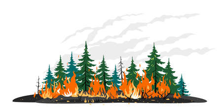 Burning forest spruces in fire flames clipart template, nature disaster concept isolated illustration, poster danger, careful with fires in the woods
