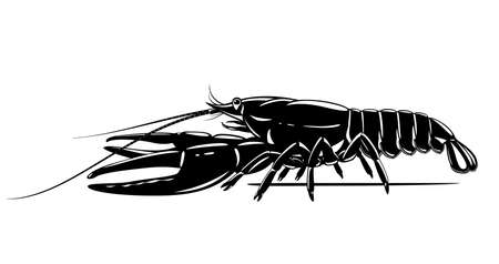 Realistic narrow-clawed crayfish black and white isolated illustration, one big freshwater European crayfish on side view