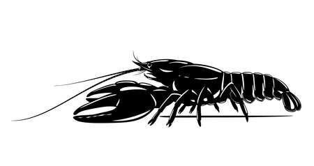 Realistic broad-fingered crayfish black and white isolated illustration, one big freshwater Noble crayfish on side view