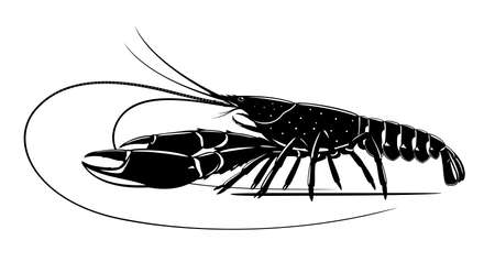 Realistic red claw crayfish black and white isolated illustration, one big freshwater Australian crayfish on side view, freshwater blueclaw crayfish, commercially crayfish
