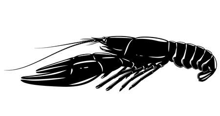 One boiled narrow-clawed crayfish in black and white isolated illustration, realistic freshwater European crayfish on side view