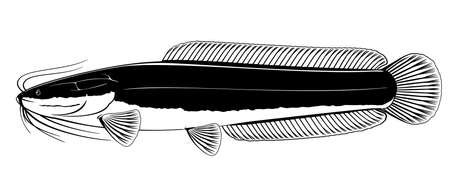Realistic African sharptooth catfish in side view in black and white isolated illustration, one big freshwater fish Clarias gariepinus with long barbels and tail, bottom-dwelling fish for aquaculture Иллюстрация