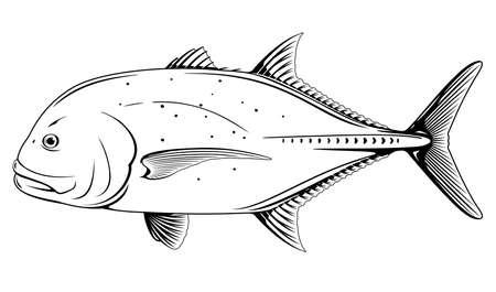 Giant trevally fish black and white illustration Иллюстрация