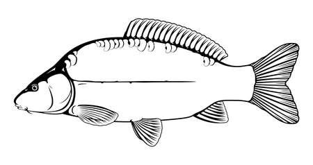 Leather carp fish black and white illustration Иллюстрация