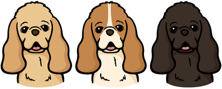 cocker: American Cocker Spaniel (dog)