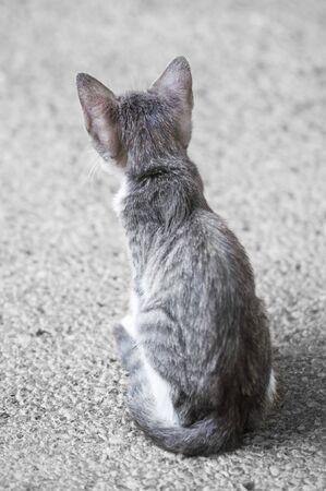 purring: Little Kitten