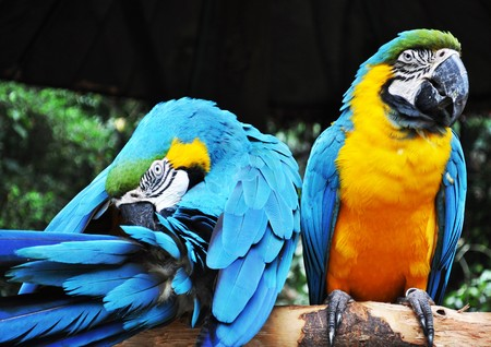 The colorful Parrot birds