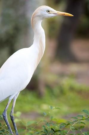 Heron bird photo