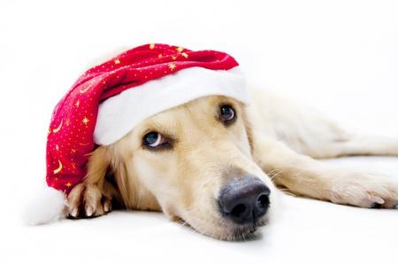Santas dog