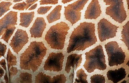 Giraffe pattern Stock Photo