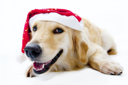 Santa's dog Stock Photo - 8834198