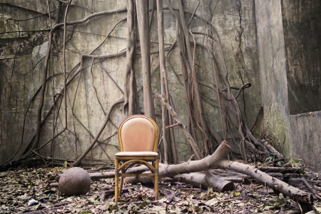 the roots on the wall and the empty chair photo