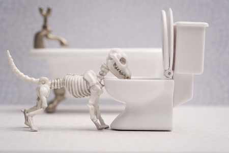 dead dog: Skeleton dog drink out of toilet Stock Photo
