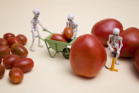 died: A skeleton pumping small tomato to be a big one Stock Photo