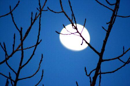 moon shining through the fall branches Banco de Imagens