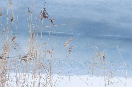 canne: Canne in mare freddo. Inverno sfondo.